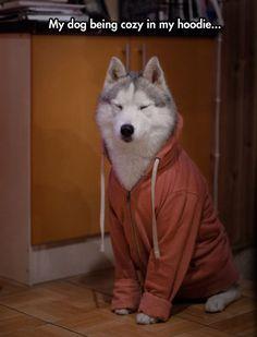 "DOG: "" I SERIOUSLY DOUBT IT. """