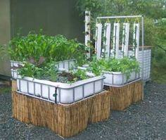 How to get started in Aquaponics – Rules-of-Thumb.