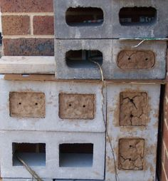 Nest Blocks & How to Attract Blue Banded Bees Sustainable Environment, Sustainability, Insect Hotel, Mason Bees, Garden Ornaments, Lizards, Nests, Habitats, Baths