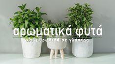 🌿 Φυτεύουμε αρωματικά φυτά και μυρωδικά σε γλάστρα και μαθαίνουμε τα μυστικά για τη φροντίδα τους. Επιλέγουμε γλάστρες και ζαρντινιέρες και τα τοποθετούμε στο κατάλληλο σημείο στο σπίτι και στο μπαλκόνι. Ακολουθούμε τις συμβουλές για την περιποίηση τους, το πότισμα, το λίπασμα, το κλάδεμα και είμαστε έτοιμοι! Τι πιο όμορφο από το να κόβουμε φρέσκο μαϊντανό, άνηθο, ρόκα, ρίγανη, θυμάρι, φασκόμηλο, δυόσμο, μέντα και δεντρολίβανο για την κουζίνα μας και να τα απολαμβάνουμε σε υπέροχες…