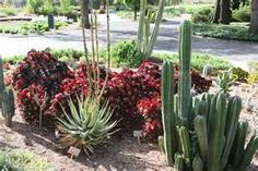 Cactus Garden....