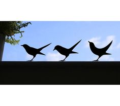 3 Blackbird window stickers or wall decals by jolyonyates on Etsy