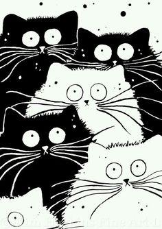 #Felinos * #Ilustração *