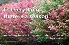 "Ecclesiastes 3:1 ""To everything there is a season, and a time to every purpose under the heaven"""