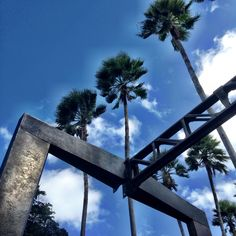 Form, function and palm trees  #BallyArtBaselMiami #Triangle Walks
