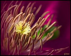 ~~ Passion Flower by Dave Dube ~~