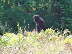 Bigfoot sighting at Mount St. Helens area on May 9th, 2002.