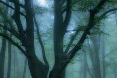 Wald und Wetter 08 – Bäume, Ebenen, Tiefe, Nebel. Die kurze Schärfe der Bilder zeigt auf einzelne Exemplare mit dem Finger. So sieht man Bäume vor lauter Wald. 2014, MD   © www.piqt.de   #PIQT
