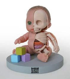 Jason Freeny baby guts