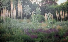 "A number of dry-habitat plants grown as a border planting, which could be a striking accompaniment to a dry meadow. In this Warwickshire garden by Dan Pearson, the tall spikes are Eremurus x isabellinus ""Cleopatra"", the silver is Eryngium giganteum and the purple is Salvia nemorosa, which can be grow alongside grasses in meadows."