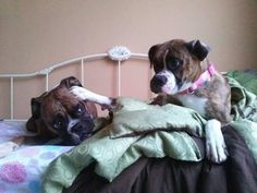 #Boxers on the bed