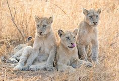 What do you think this trio is up to? Sands, Vacations, Safari, African, Crafts, Travel, Holidays, Manualidades, Viajes