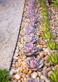 8 Elements To Include When Designing Your Zen Garden // Succulents -- Plant life connects you to nature and aids in the process of relaxation. Including low maintenance plants, like succulents, in your zen garden helps create feelings of calmness and serenity. More