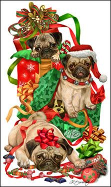 Pug - All Wrapped Up (Fawn) -  by Margaret Sweeney