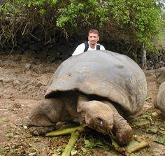 ... needs a turtle on Pinterest Pet turtle, Turtles and Big turtle