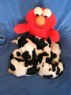 Elmo and Pups!