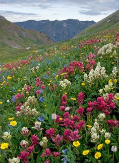 Download Wallpaper 1920x1080 Garden Spring Landscape Full Hd 1080p