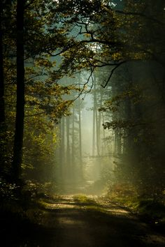 "ethereal-vistas: ""Mysterious forest by Robert Tarczyński """