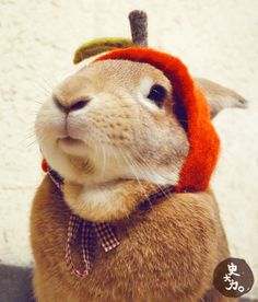 """Happy Easter humans!! #rabbit-hatted gif """"where do you bought the hat? dearoy.com"""""""
