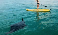 Things we've done on St John: SUP with manta (although our pictures weren't this good)