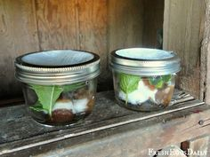 DIY Fly traps and repellents - vanilla and mint leaves in little jars to sit around your BBQ or picnic to keep flies away. Also  More Ways to Control Flies in your chicken Coop and Run NATURALLY