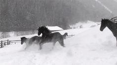 horse gifs - Google Search