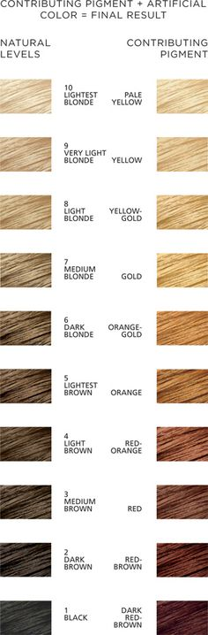 Hair Color Levels & Contributing Pigment Chart