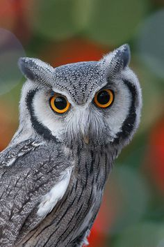 Holiday Owl. For those of you who love this owl, go to YouTube and search for Transformer Owl. It's hysterical!