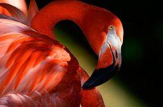 Flamingo 2015 Audubon Photography Awards Top 100   Audubon