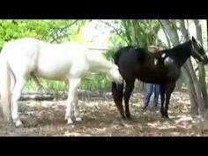 New Animal mating video compilation  Horse mating,Horse breeding, animal...