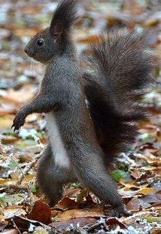 SQUIRREL! So funny, how he walks upright like a person, looks like he has places to go and people to see