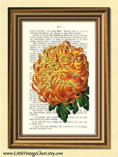 CHRYSANTHEMUM - Dictionary art print -Vintage art book page print recycled- Antique Book Page upcycled - Art Print Dictionary Dictionary Art, Home Decor Paintings, Antique Books, Chrysanthemum, Book Pages, Botanical Prints, Vintage Art, Wall Art Prints, Book Art