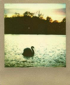 Amazing shot by Andrew Millar1 His whole photostream is beautiful, definitely worth a look if you love polaroids...