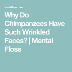 Why Do Chimpanzees Have Such Wrinkled Faces? | Mental Floss