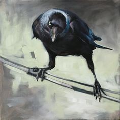 An animal lover all her life, Aimée Rolin Hoover is a contemporary wildlife painter living and working in Los Angeles, California. Crow Art, Raven Art, Bird Art, Animal Paintings, Animal Drawings, Art Drawings, Horse Drawings, Drawing Art, Crows Drawing