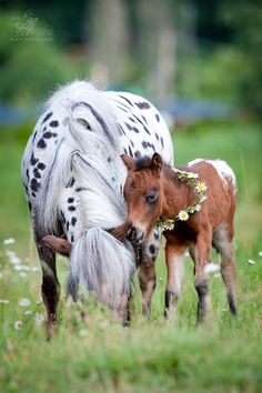 Horse / Appaloosa mare with foal,  by Alexia Khruscheva