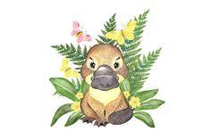 Cute Australian Animals, Australian Nursery, Baby Animals, Cute Animals, Small Animals, Baby Platypus, Baby Animal Drawings, Chicken Art, Most Beautiful Animals