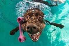 Makes you laugh, dog fetching toys in water