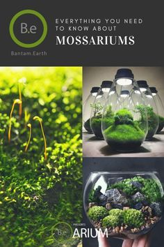 "Mossarium: Complete Care Guide & ""How To"" Build - Vivarium Ideas wedding Terrarium succulentes Water Garden, Garden Plants, Indoor Plants, House Plants, Air Plants, Cactus Plants, Terrarium Diy, Terrarium Wedding, Container Plants"