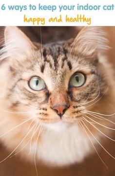 6 ways to keep your indoor cat happy & healthy!