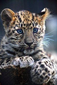 Very cute
