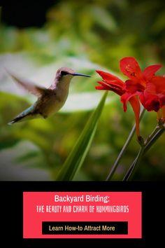 Backyard Birding: The Beauty and Charm of Hummingbirds Collective Nouns, Flock Of Birds, Backyard Birds, Hummingbirds, Newspaper, Feathers, Hunting, Creatures, Charmed