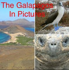 In honour of today being Darwin Day I thought I'd pull together a selection of photos from my trip to The Galápagos Islands! I genuinely cannot rave about these islands enough, they are by far my favourite place on the… View Post
