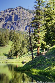 Trout Lake Trail, Yellowstone National Park, Wyoming