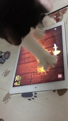 Funny Animal Jokes, Funny Cute Cats, Cute Baby Cats, Cute Cats And Kittens, Funny Cat Videos, Cute Little Animals, Cute Funny Animals, Kittens Cutest, Cute Animal Videos