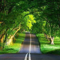 Oak Tree Road, Ireland