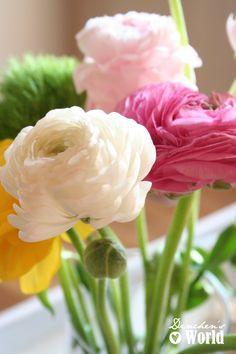 Blumendekoration Ranunkeln