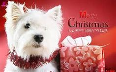 christmas cards - Yahoo Image Search Results