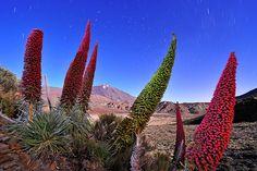 imagenes del teide -   Google  Fotografía ganadora del Wildlife Photographer of the Year