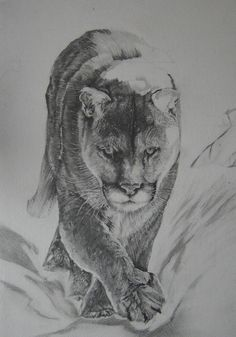 Good afternoon Here is todays update. As you can see I am continuing to work to work on the Mountain Lion. I hope you enjoy watching this grow. If you have any questions please feel free to ask. I accept commissions, to see what people have to say about the work I have produced for them, please visit http://www.davidtruman.co.uk/Testimonials